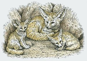 Illustration of female Fennec Fox (Vulpes zerda or Fennecus zerda) with two young
