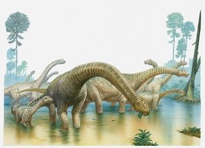Illustration of a group of sauropod dinosaurs feeding in swampland
