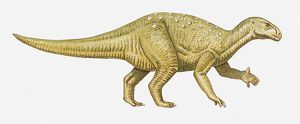 Illustration of an Iguanodon dinosaur, side view