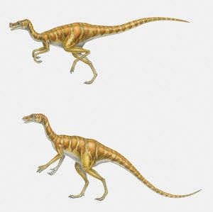 Illustration of two Ornitholestes dinosaurs, running and standing, side view