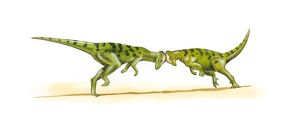 Illustration of two Pachycephalosaur dinosaurs head butting each other.