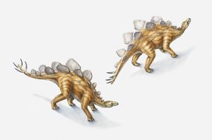 Illustration of a pair of Stegosauri, Jurassic period