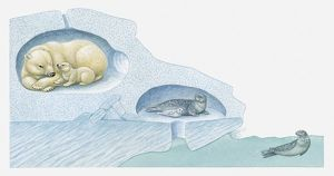 Illustration of Polar Bear with cub and Harp Seal with pup in ice burrows, and seal