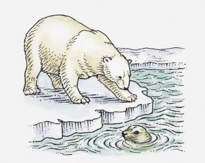 Illustration of polar bear looking at seal in water