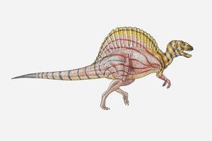 Illustration of a sail-backed dinosaur, side view
