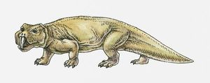 Illustration of a Scaphonyx, type of rynchosaur, Triassic period