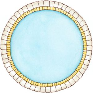 Illustration showing cross section of double layer of dinosaur cell membrane