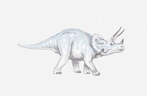 Illustration of a Triceratops dinosaur, Cretaceous period