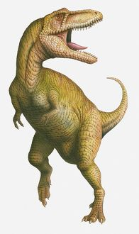 Illustration of a Tyrannosaurus Rex with its mouth wide open, late Cretaceous period