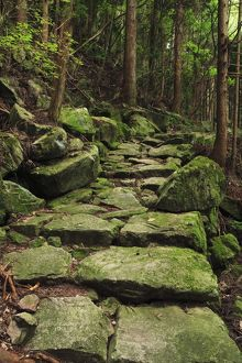 Japan, Mie Prefecture, Kumano Kodo, Stone steps in forest