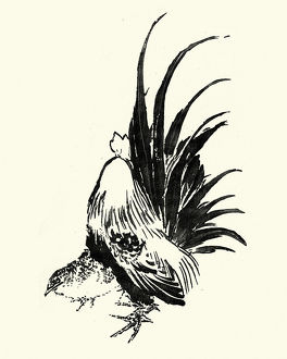Japanesse Art, Sketch of a cockerel