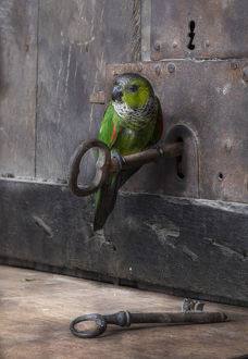 key and parrot