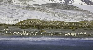 King penguins and Southern elephant seals on beach