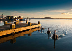 Lake Rotorua with swan and pier