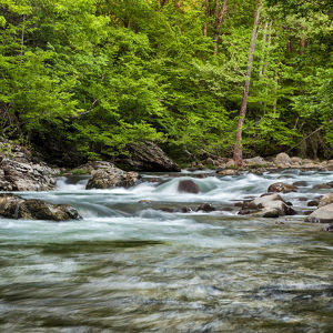 Little Pigeon River at Greenbrier, Great Smoky Mountains National Park, Tennessee, USA