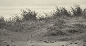 Marram Grass on the Northumberland Coastline