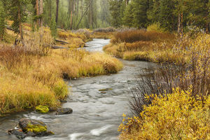Meandering stream in autumn, Yellowstone National Park, Wyoming, USA