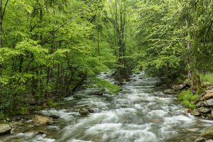 Middle Prong in spring, Great Smoky Mountains National Park, Tennessee, USA