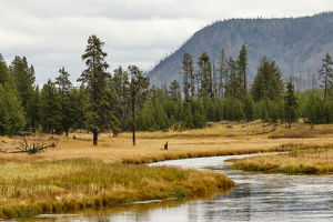 New Perce River winding through meadow, Yellowstone National Park, Montana, Wyoming, USA