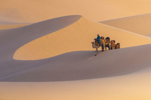 travel imagery/travel photographer collections coolbiere landscapes/nomad riding camel sand dune gobi desert