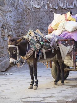 pack donkey laden cart medina marrakech marrakech tensift al