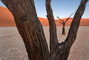 Paul's Deadvlei composition