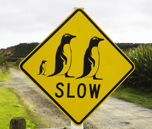 Penguin crossing sign on country road