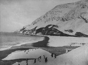 collections/heritage images/penguins elephant island aken sir ernest henry