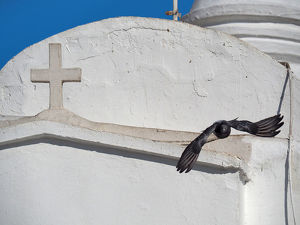 Pigeon Flying Over White Church Wall On Lycabettus Hill, Athens