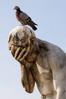 Pigeon standing on a statue in Jardin des Tuileries, Paris (France)