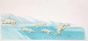 Polar Bears, Ursus maritimus, diving under water for fish and resting on ice at glacier edge