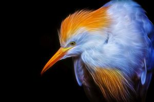Portrait of an Egret in Neon