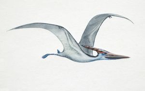 Pteranodon, side view