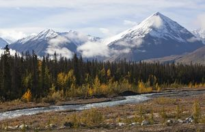 travel/canada kluane national park reserve yukon territory/quill creek indian summer leaves fall colours
