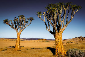 travel imagery/travel photographer collections nick brundle travel photography/quiver trees rocky landscape namibia