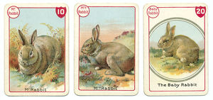 Three rabbit playing cards Victorian animal families game