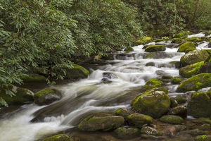 Roaring Fork flowing over moss covered boulders, Roaring Fork Motor Nature Trail