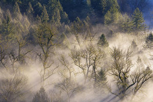 Rolling Fog over Sandy River Valley I