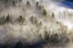 Rolling Fog over Sandy River Valley II
