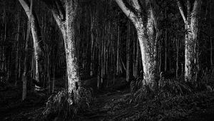 Scary dark forest
