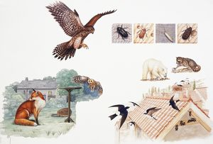 Selection of wild animals and insects