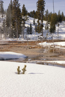 Snowy Landscape, Yellowstone National Park, Wyoming, USA