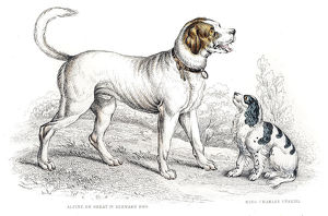 St. Bernard and King Charles Spaniel engraving