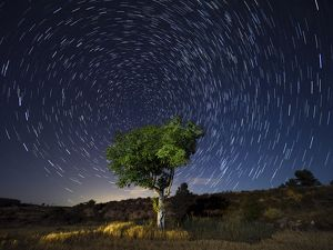 Star Trails. A green tree leaves the field in a starry night