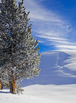 Sunny day in Winter, Yellowstone National Park, Wyoming, USA