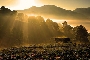 travel/photographer collections tonnaja travel photography/sunrise strawberry farm doi ang khang