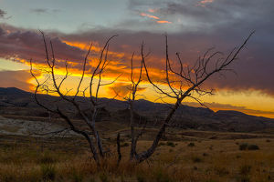 Sunset at Painted Hills with Petrified Tree