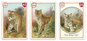 Three tiger playing cards Victorian animal families game