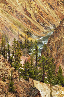 Trees and colorful patterns on canyon walls, Grand Canyon of Yellowstone, Yellowstone National Park