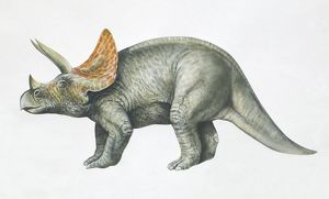 Triceratops, side view